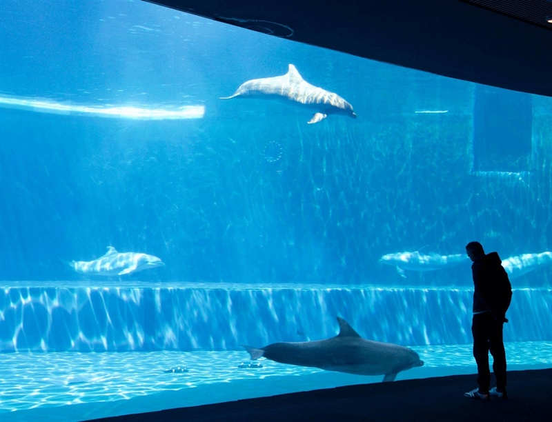 Aquarium of Genoa | Genoa, Italy | Travel BL