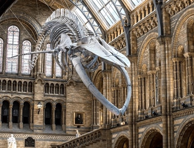 Natural History Museum | London, England,UK | Travel BL